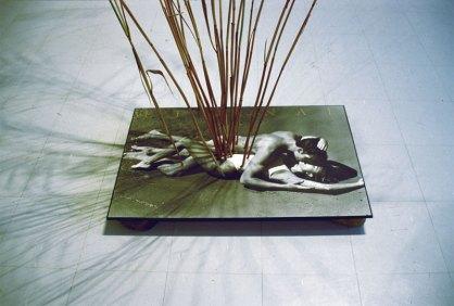 Ikebana, 2004