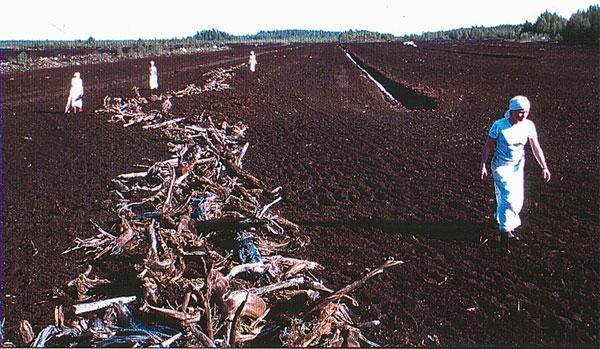 Napanuora/Cord, SuoMen-performance, silently dragging roots back to the marsh/hiljaisesti konkeloiden takaisin vieminen suolle, 1998
