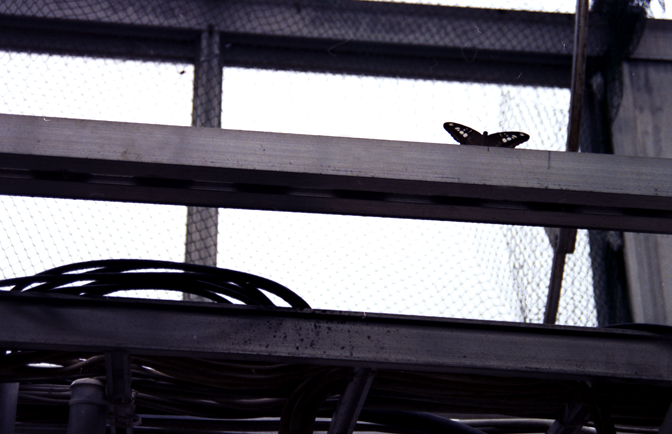 perhospuutarhassa