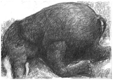 elefantti-pieni